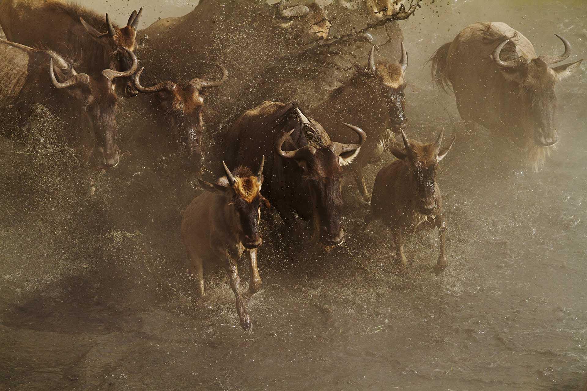 Endlesssafari_Africa76