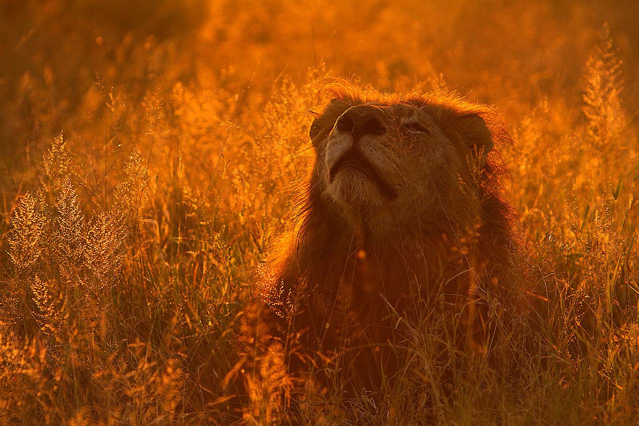 best safari areas in Africa